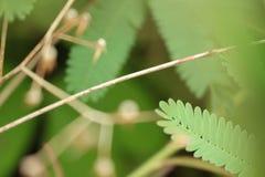 Groene bladeren bokeh royalty-vrije stock afbeeldingen