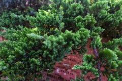 Groene bladeren in bos Groene bokeh op de achtergrond royalty-vrije stock foto