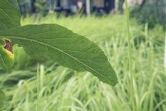 Groene bladeren boven de achtergrond van de grasaard Royalty-vrije Stock Afbeeldingen