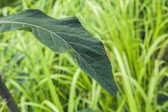 Groene bladeren boven de achtergrond van de grasaard Stock Foto's