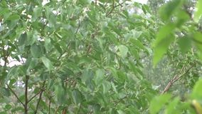 Groene bladeren in de regen stock videobeelden