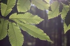 Groene bladeren in de zomerlicht royalty-vrije stock afbeeldingen