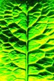 Groene bladeren die door de zon worden benadrukt stock foto