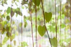 Groene bladeren die in huistuin hangen Royalty-vrije Stock Afbeeldingen