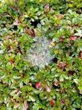 Groene bladeren die met dauw worden behandeld Stock Foto