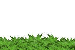 Groene bladeren die op witte achtergrond worden geïsoleerd Stock Afbeelding
