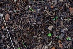 Groene bladeren die van de aarde groeien die, in licht, onduidelijk beeld worden gebaad Stock Foto's