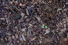 Groene bladeren die van de aarde groeien die, in licht, onduidelijk beeld worden gebaad Royalty-vrije Stock Afbeeldingen