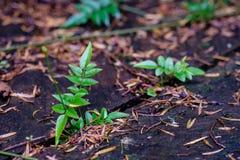 Groene bladeren die van een houten plank groeien die, in licht wordt gebaad, Royalty-vrije Stock Afbeelding