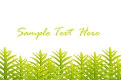 Groene bladeren die voor tekst en achtergrond worden geïsoleerdt stock foto