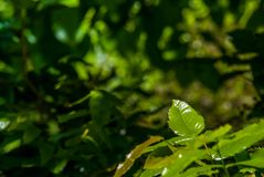 Groene bladeren die zonlicht in de middag ontvangen stock fotografie