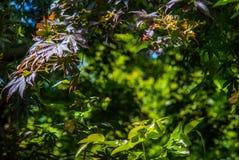 Groene bladeren die zonlicht in de middag ontvangen royalty-vrije stock foto