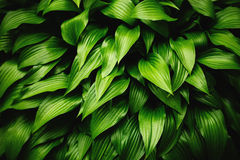 Groene bladeren dynamische achtergrond Stock Afbeelding