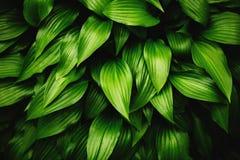 Groene bladeren dynamische achtergrond Royalty-vrije Stock Fotografie
