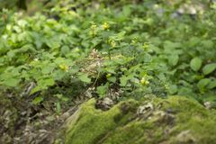 Groene bladeren in een weide Stock Foto's