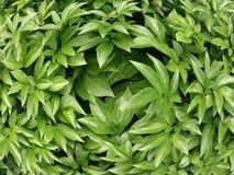 Groene bladeren, een weinig abstract beeld Royalty-vrije Stock Fotografie