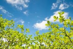 Groene bladeren en blauwe hemel met wolk Stock Afbeelding