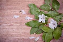 Groene bladeren en bloemen op houten achtergrond Stock Foto