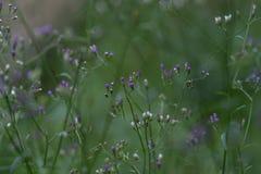 Groene bladeren en bloemknoppen die bloeien royalty-vrije stock foto