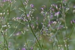 Groene bladeren en bloemknoppen die bloeien stock afbeelding