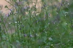 Groene bladeren en bloemknoppen die bloeien royalty-vrije stock afbeeldingen