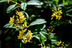 Groene bladeren en gele bloemen die met zonlicht, a door glanzen Stock Foto's