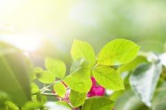 Groene bladeren en heldere zon Royalty-vrije Stock Foto's