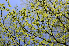 Groene bladeren en hemel Stock Foto