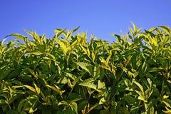 Groene bladeren en hemel stock fotografie