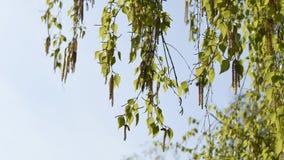 Groene bladeren en hemel stock foto's