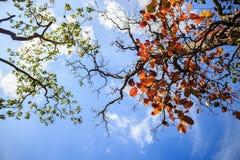 Groene bladeren en rode bladeren Stock Foto