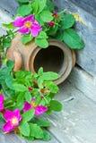 Groene bladeren en roze bloemen van rozebottels Royalty-vrije Stock Afbeeldingen