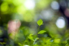 Groene bladeren en tak op vage achtergrond royalty-vrije stock afbeelding
