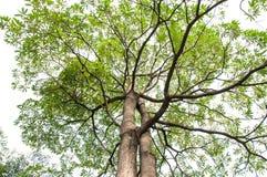 Groene bladeren en takken Royalty-vrije Stock Afbeelding