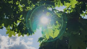 Groene bladeren en takken van een boom in de zon stock videobeelden
