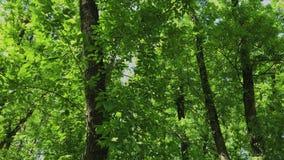 Groene bladeren en takken van een boom in de zon stock footage