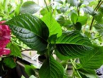 Groene Bladeren en Textuur royalty-vrije stock foto