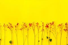 Groene bladeren en uiterst kleine rode bloemen op geel Royalty-vrije Stock Foto