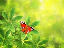 Groene bladeren en vlinder op zonnige achtergrond Stock Afbeeldingen