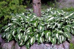 Groene bladeren en wit Stock Afbeeldingen