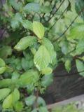 Groene bladeren in gartineaupark Stock Afbeelding