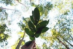 Groene bladeren in het bos Royalty-vrije Stock Afbeeldingen