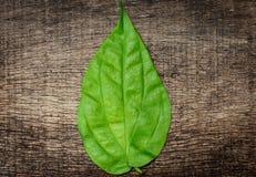 Groene bladeren in het midden van houten achtergrond Stock Foto's