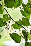 Groene bladeren in het zonlicht stock foto's