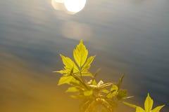 Groene bladeren hierboven - water Royalty-vrije Stock Foto