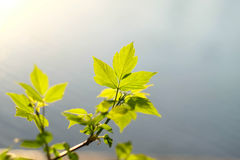 Groene bladeren hierboven - water Royalty-vrije Stock Afbeelding