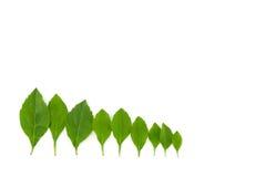 Groene bladeren, klein bos Stock Foto's