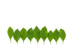 Groene bladeren, klein bos Stock Afbeelding
