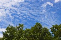 Groene bladeren met blauwe hemel en wolk Stock Foto
