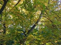Groene Bladeren met Boomboomstammen Stock Afbeeldingen